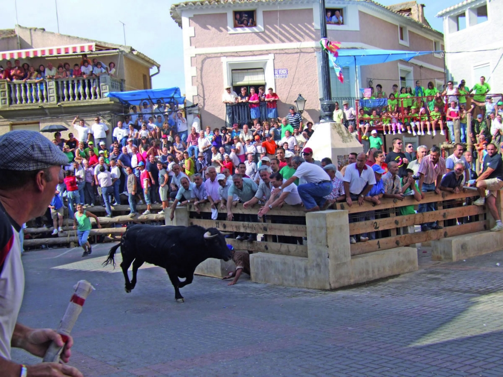 Bull running during Popular Festivities