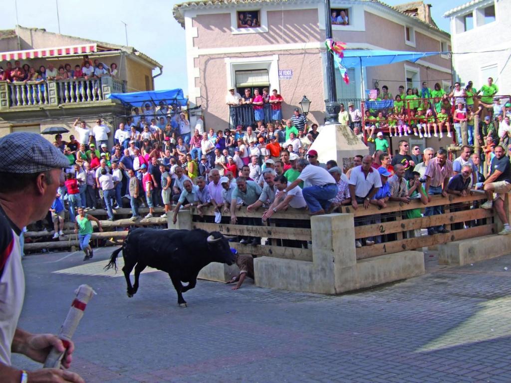 Bull running in popular festivities
